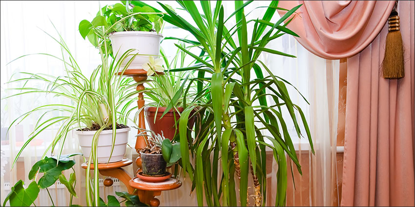 Houseplant clutter